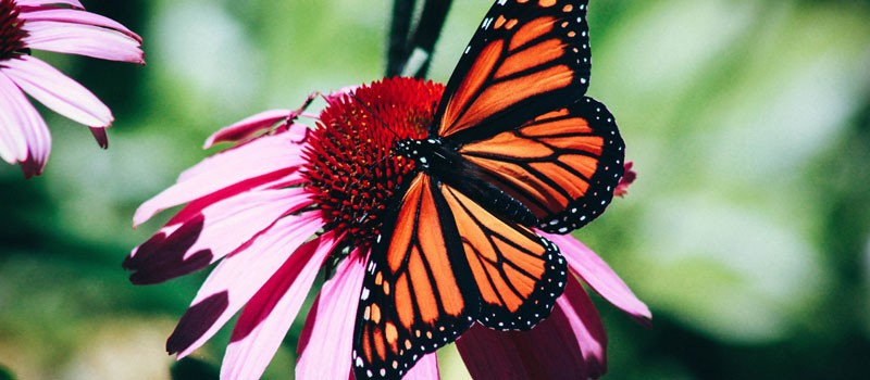 "How to turn ""butterfly customers"" into Monarchs"